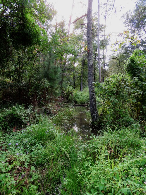 East Texas creek