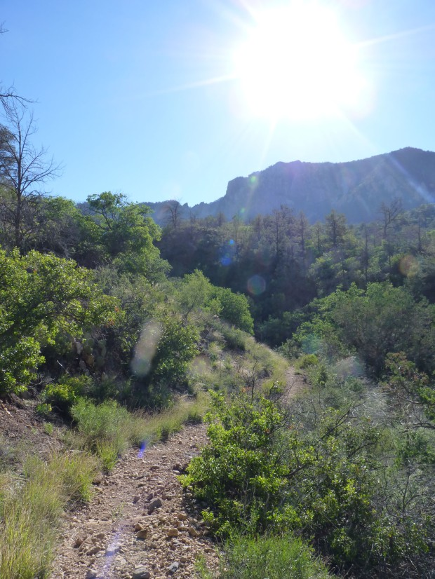 This is the Pinnacles Trail up to the South Rim of the Chisos.