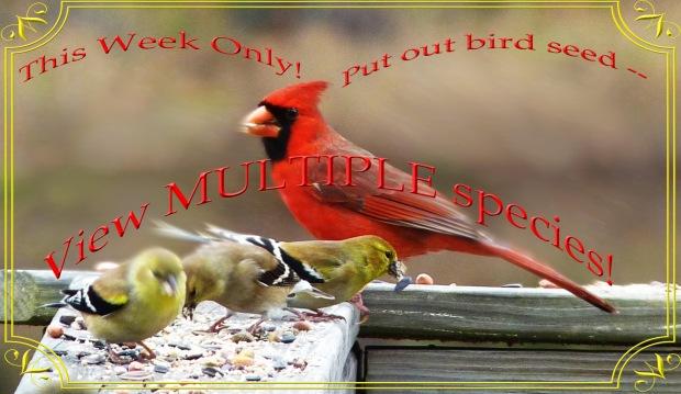 bird ad