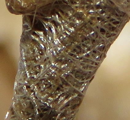 Close-up of stem wrapping.
