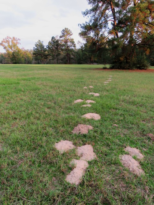 Gopher mounds luring me into the pasture, to find what? Only the gophers know their sinister plan.