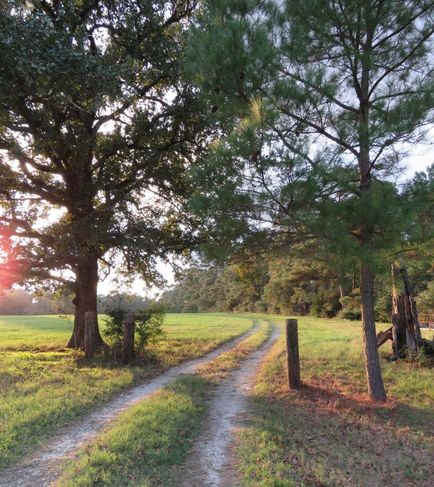 Our road, East Texas.