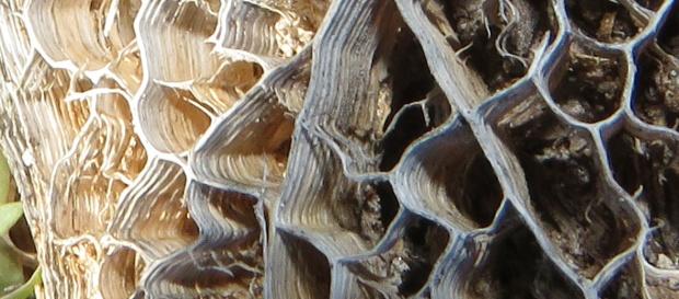 pear detail 2