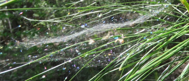 A barely-there web, that looks more Doily-above-Bowl to me.