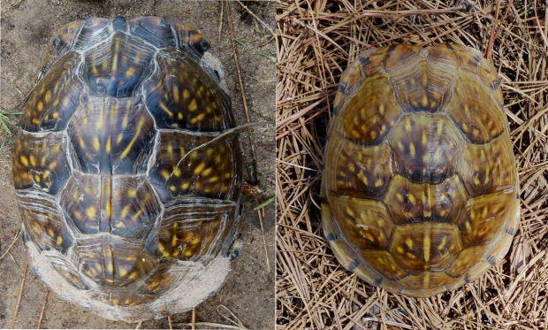 This week's find on the left, a turtle from 2012 on the right.