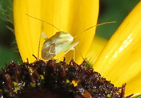 A tiny beetle.