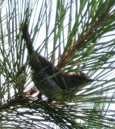 mystery bird 2