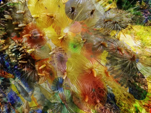 Here's an easy one -- I just put a transparent layer of the seedhead photo over one of my photos of the glass at Bellagio.