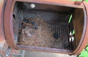 Wren nest in old barbecue smoker.