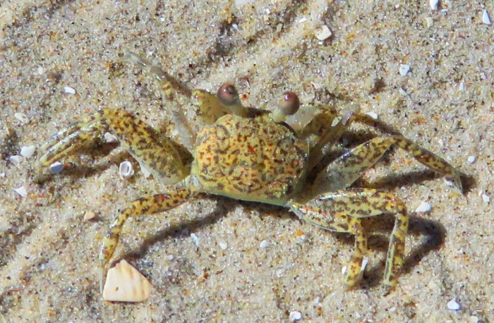 ... a little crabby.