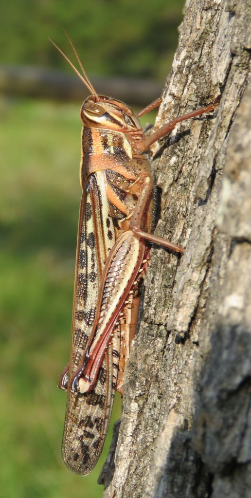 grasshopper profile