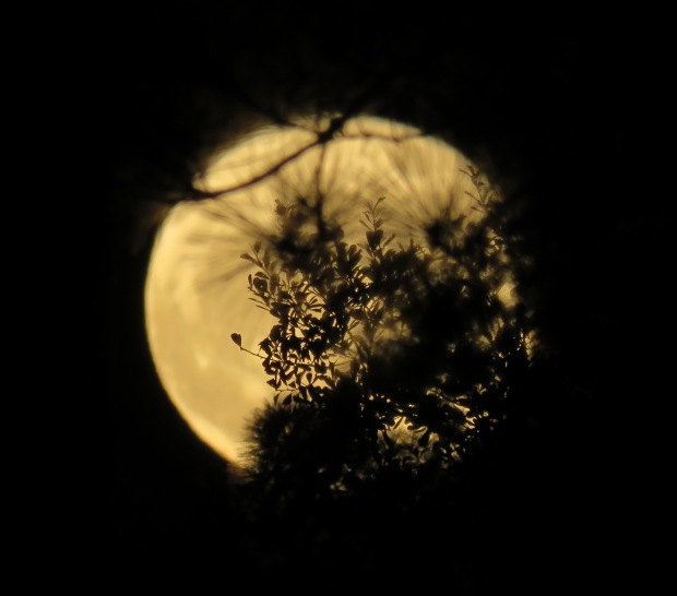 Moon and foliage.