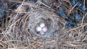 Close-up of nest.