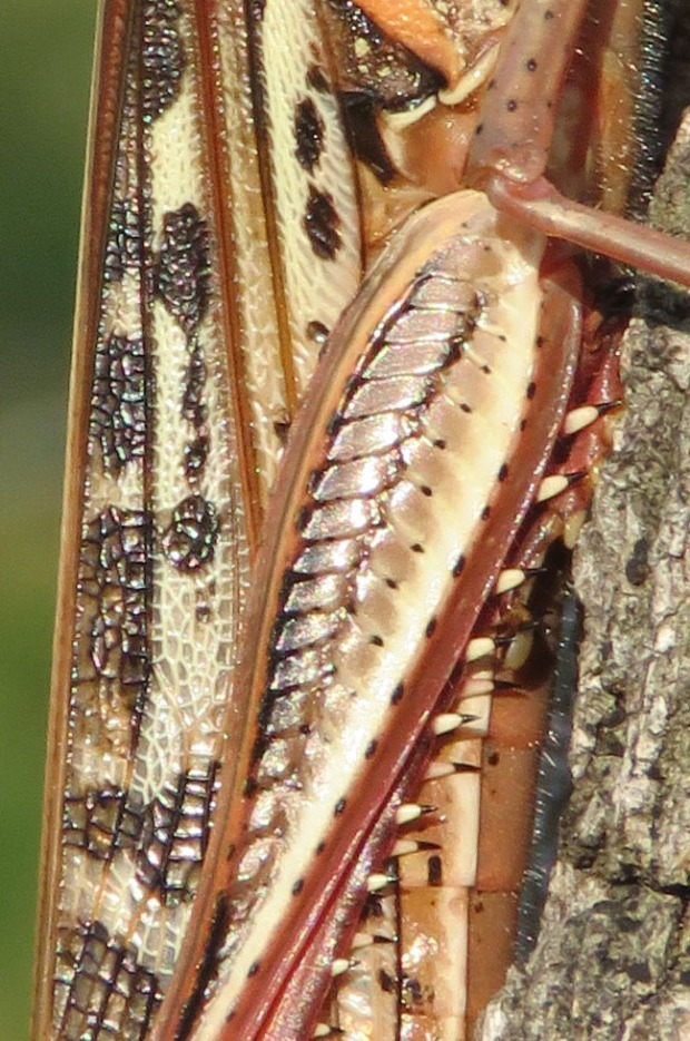patterns on grasshopper