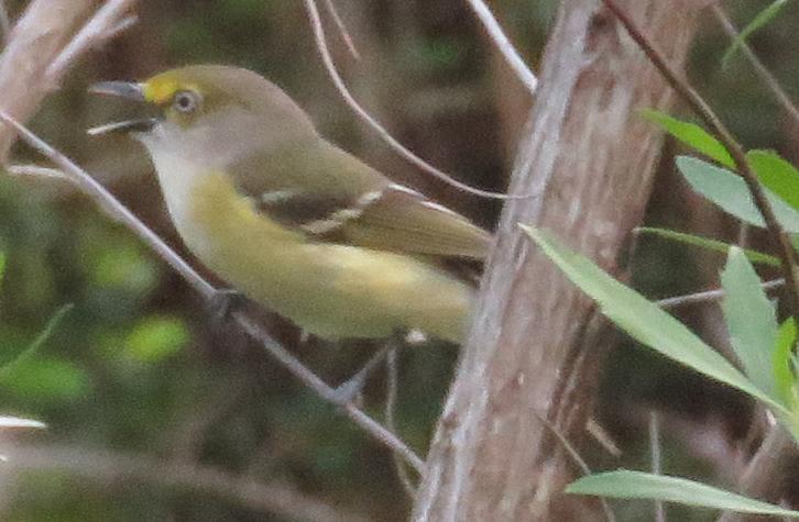 Bird 97