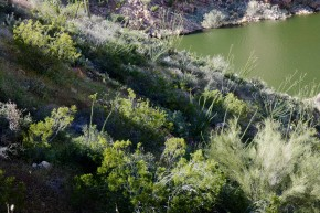 desert plants in shades of green
