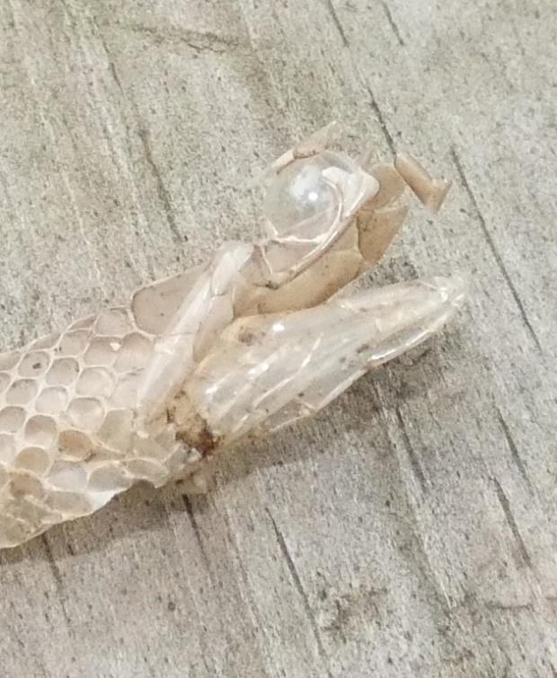 snake skin head detail
