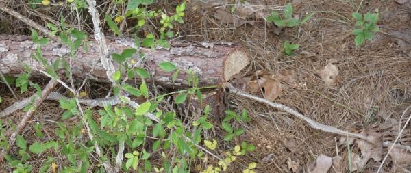 snake skin near log