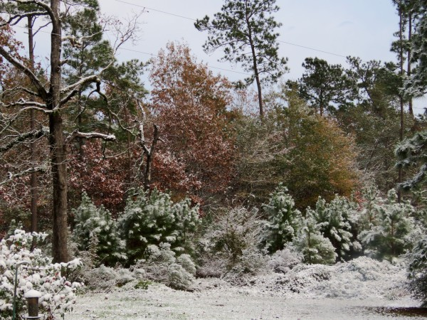 light dusting of snow on trees