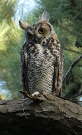 Studious owl.